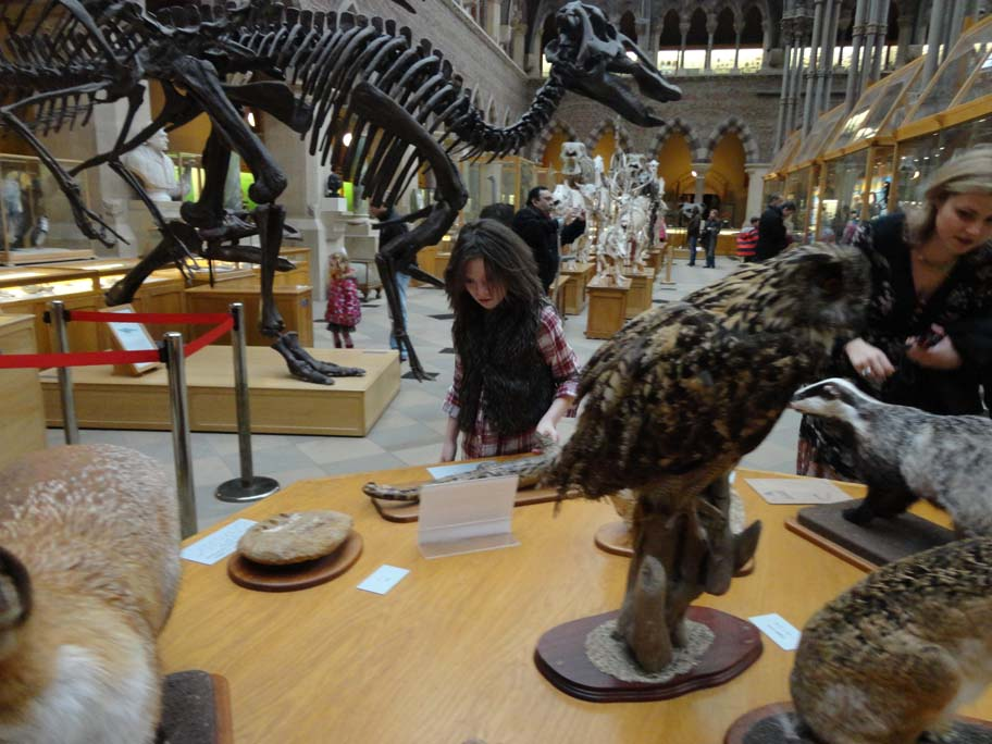 Pitt Rivers and Oxford University Museum of Natural History @pitt_rivers